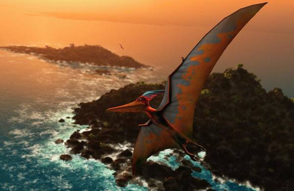 Extinction Photograph - Artwork Of Pteranodon Sternbergi by Mark Garlick/science Photo Library