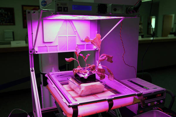 Developed Wall Art - Photograph - Astronaut Vegetable Production System by Nasa
