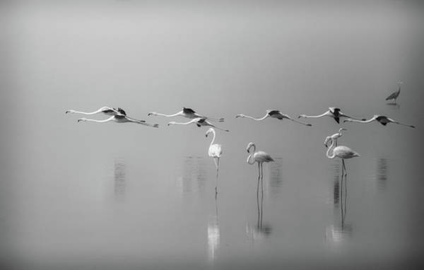 Flying Bird Photograph - At A Glance by Ahmed Thabet