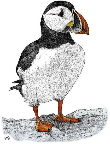 Wall Art - Photograph - Atlantic Puffin by Roger Hall