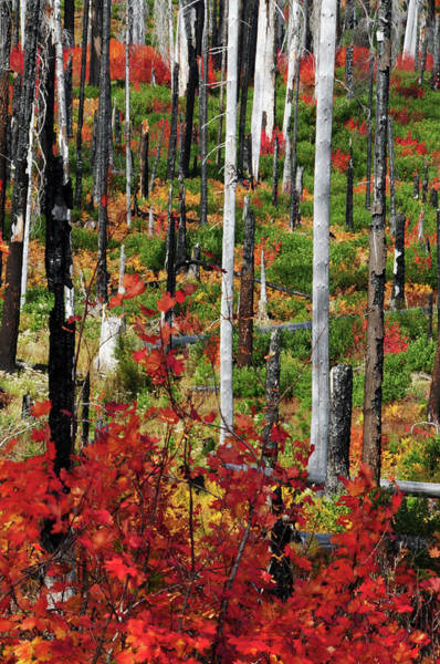 Heal Photograph - Autumn At The Santiam Pass, Oregon, Usa by Michel Hersen