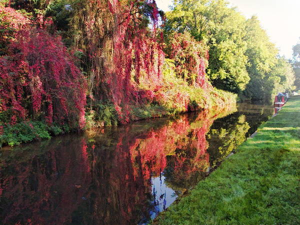 Digital Art - Autumn Colours by Paul Gulliver