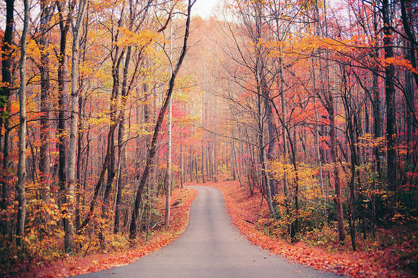 The Great Smoky Mountains Wall Art - Photograph - Autumn Country Road In The Forest by Moreiso