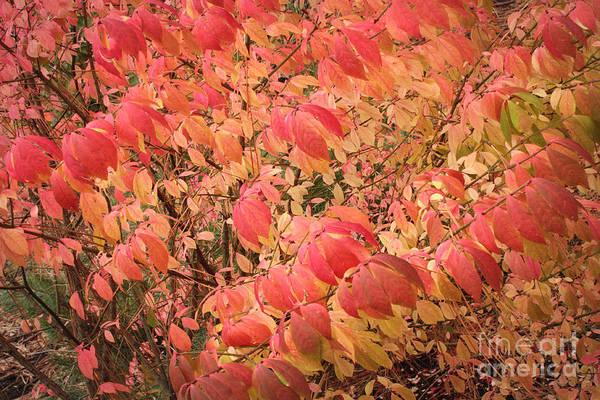 Photograph - Autumn Drama by Carol Groenen