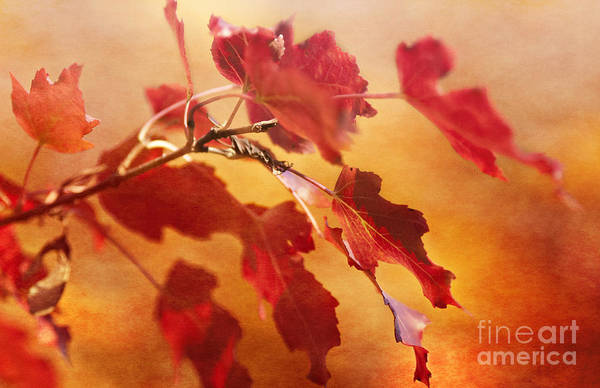 Photograph - Red Blaze by Pam  Holdsworth