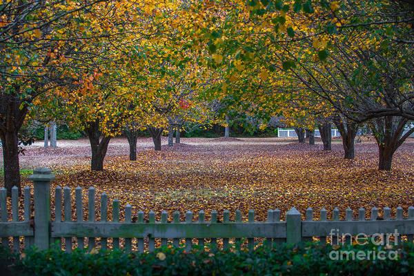 Photograph - Autumn Splendor by Dale Powell