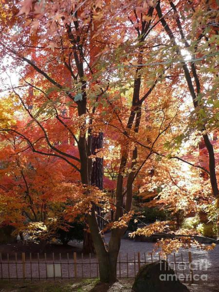 Photograph - Autumn Glow by Carol Groenen
