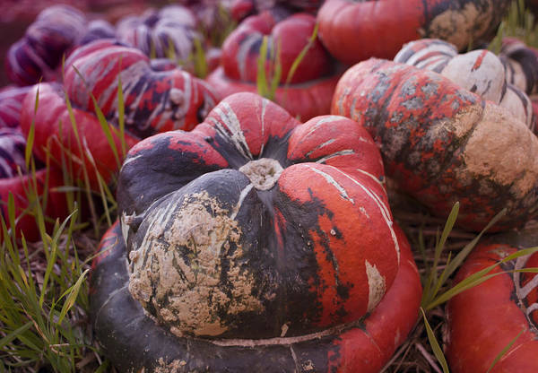 Photograph - Autumn Harvest by Miguel Winterpacht