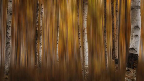 Photograph - Autumn Haze by Darlene Bushue
