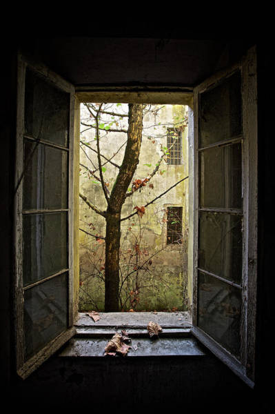 Window Photograph - Autumn In Asylum by Marco Tagliarino