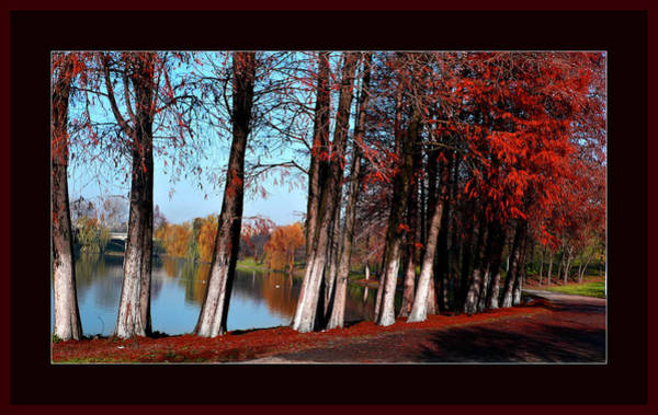Photograph - Autumn In Romania by Daliana Pacuraru