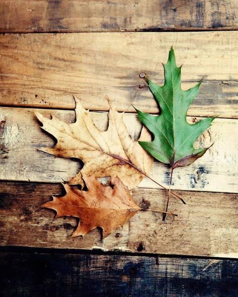 Fall Photograph - Autumn Leaves Ablaze With Color by Kim Fearheiley