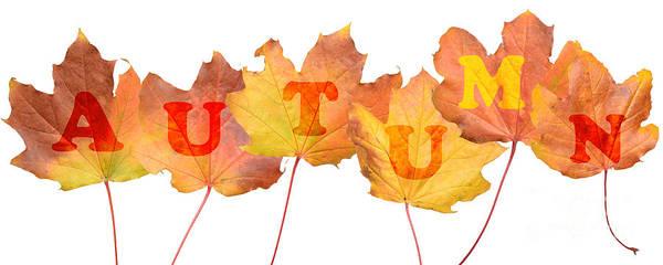 Fallen Leaves Photograph - Autumn Leaves by Amanda Elwell