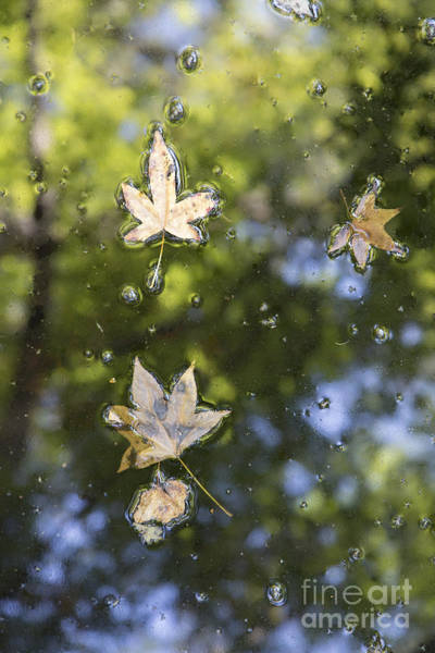 Photograph - Autumn Leaves by Dustin K Ryan
