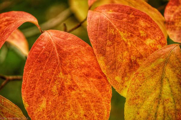 Macro Wall Art - Photograph - Autumn Leaves by Kathi Isserman