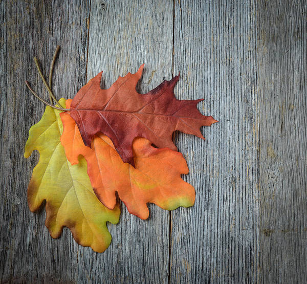 Photograph - Autumn Leaves On Rustic Wooden Background by Brandon Bourdages