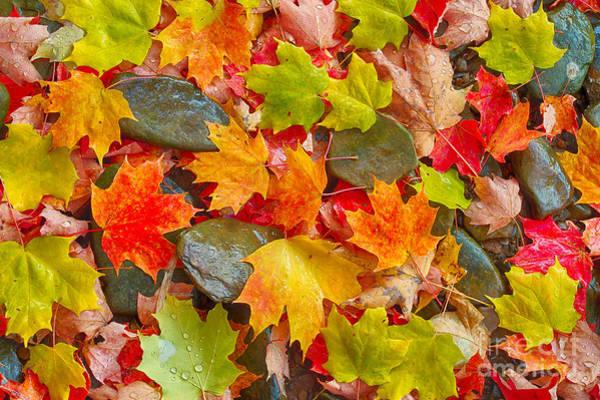 Photograph - Autumn Palette Of Color by Joshua Clark