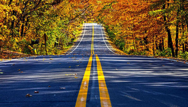 Photograph - Autumn Road by Phil Koch