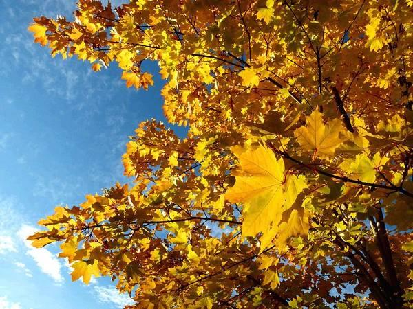 Okanagan Valley Digital Art - Autumn Splendor 9 by Will Borden