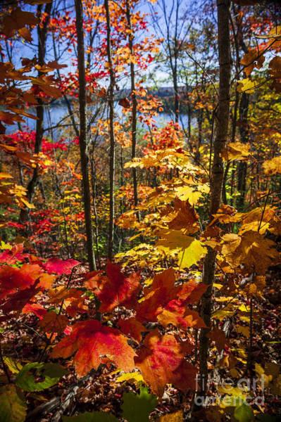 Wall Art - Photograph - Autumn Splendor by Elena Elisseeva
