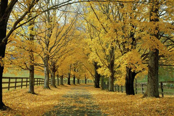 Near Photograph - Autumn Trees Near Waynesboro Virginia by Panoramic Images