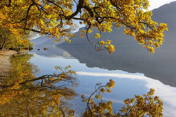 Glenridding Wall Art - Photograph - Autumn Trees by Sebastian Wasek