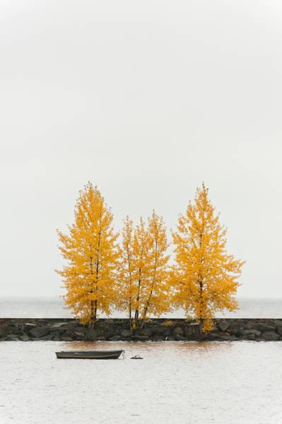 Photograph - Autumn Trees by U Schade