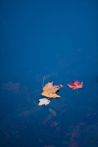 Photograph - Autumn Trio by Joye Ardyn Durham