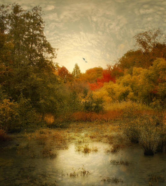 Photograph - Autumn Wetlands by Jessica Jenney