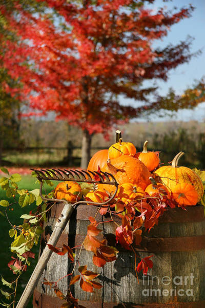 Photograph - Autumns Colorful Harvest  by Sandra Cunningham