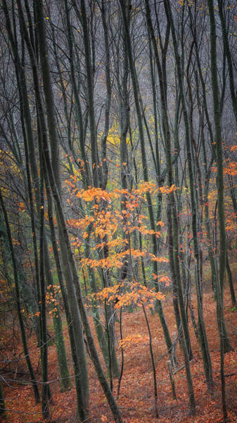 Photograph - Autumn's Last Stand by Bill Wakeley