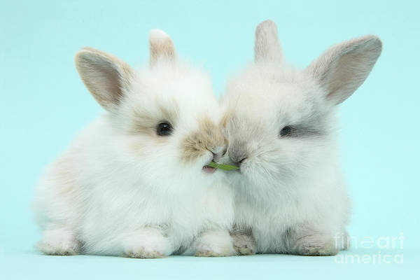 Photograph - Baby Bunnies by Mark Taylor