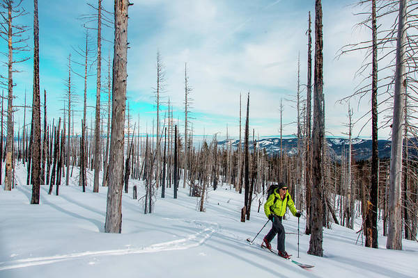 Wall Art - Photograph - Backcountry Skier Touring On Mount Hood by Modoc Stories