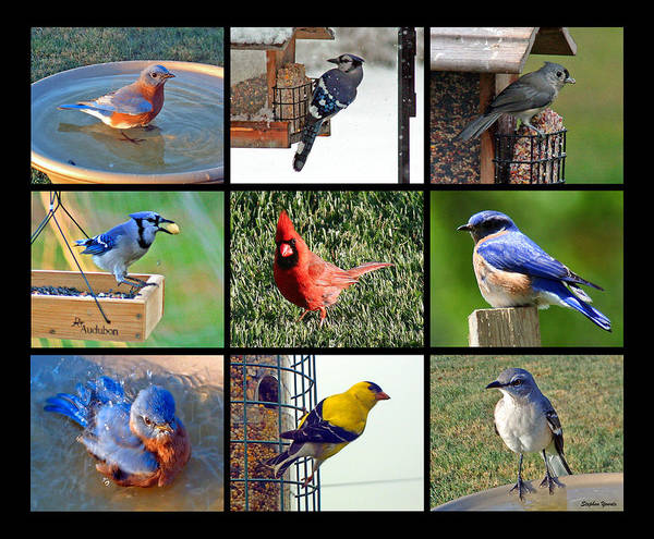 Bird Watching Digital Art - Backyard Birds by Stephen Younts