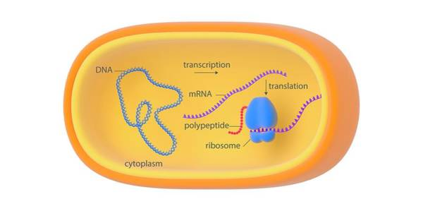 Bacterial Gene Expression Art Print