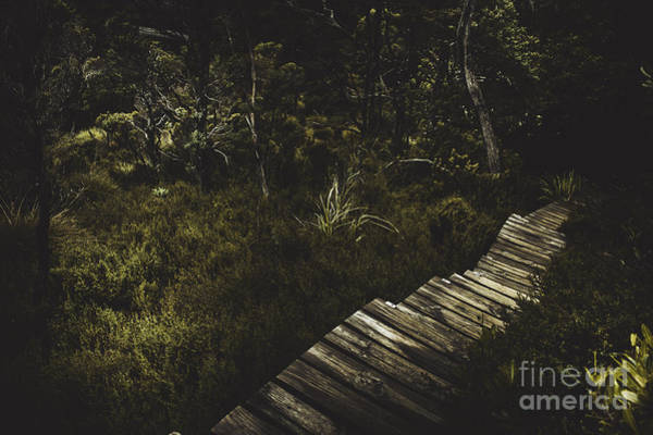 Photograph - Ballroom Forest On The Dove Lake Walking Track by Jorgo Photography - Wall Art Gallery