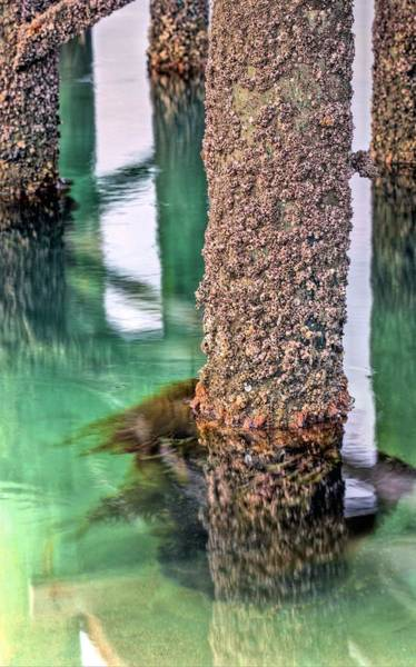 Under The Pier Photograph - Barnacles  by JC Findley