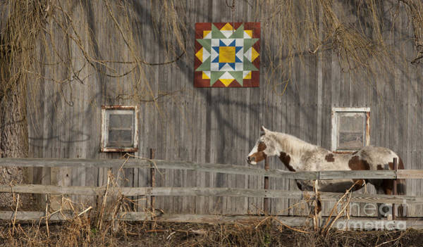 Wall Art - Photograph - Barnyard Patterns by Roger Bailey