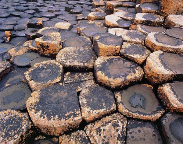 Wall Art - Photograph - Basalt Column Formation Of Giant's Causeway by Simon Fraser/science Photo Library