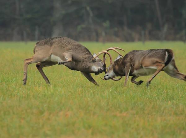 Photograph - Battle Bucks by Doug McPherson