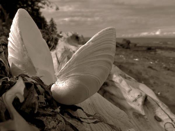 Photograph - Beachcombing by Micki Findlay