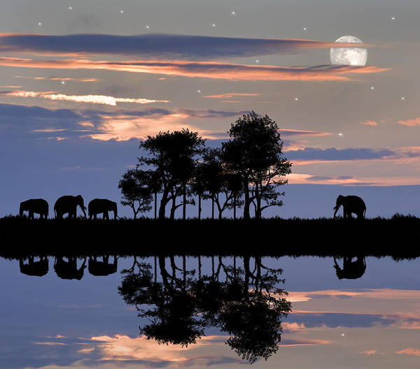Colorful Giraffe Photograph - Beautiful African Themed Silhouette With Stunning Sunset Sky by Matthew Gibson