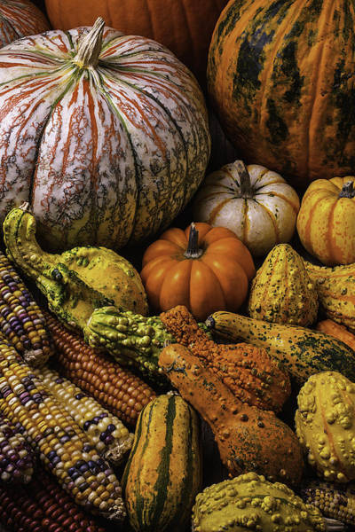 Gourd Photograph - Beautiful Autumn Harvest by Garry Gay