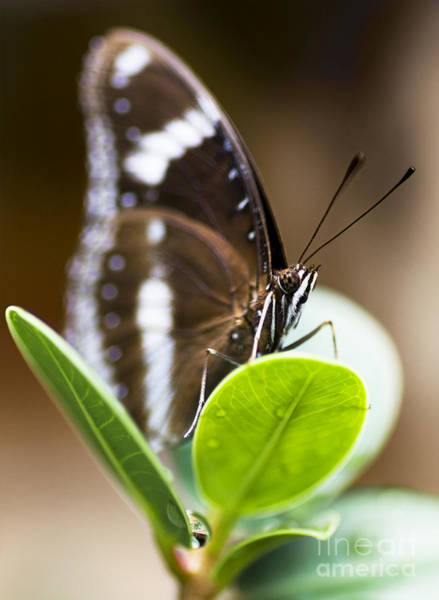 Photograph - Beautiful Butterfly by Jorgo Photography - Wall Art Gallery