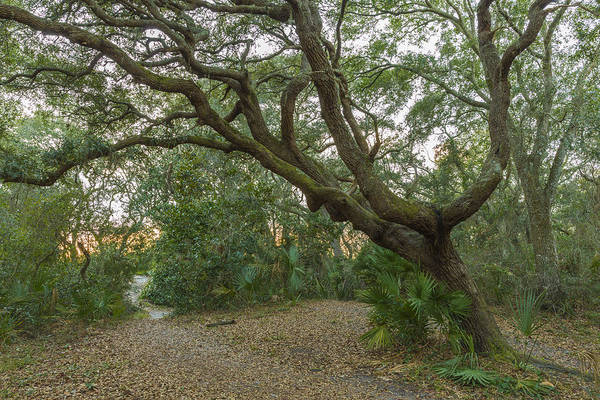 St Augustine Photograph - Behind The House by Jon Glaser