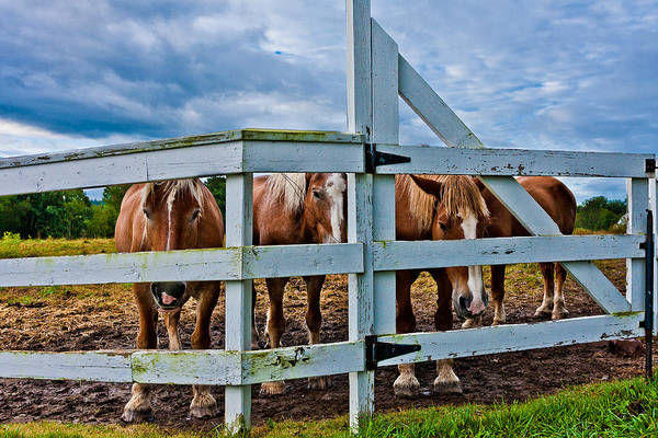 Photograph - Belgians At The Gate by Jeff Sinon