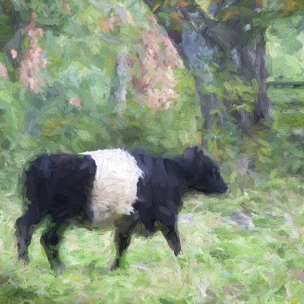 Cookie Wall Art - Photograph - Belted Galloway Cow Painterly Effect by Carol Leigh