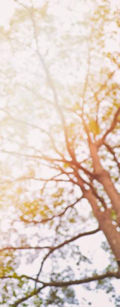 Photograph - Beneath A Tree  14 5284  Diptych  Set 1 Of 2 by U Schade