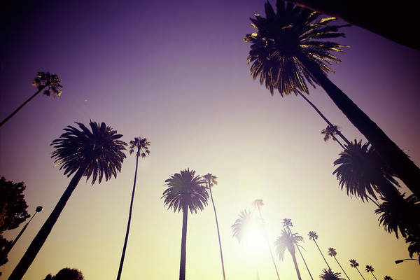 City Of Los Angeles Photograph - Beverly Hills Palm Trees by Lpettet