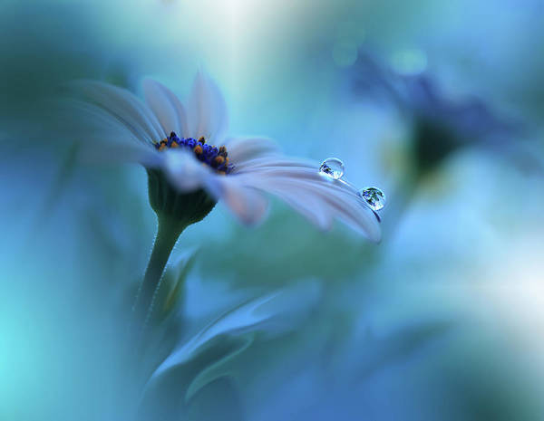 Drop Photograph - Beyond The Visible... by Juliana Nan